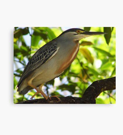 Heron, Brazil Canvas Print