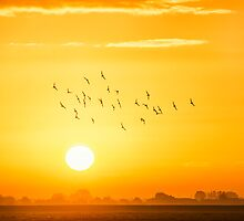 Free Like A Bird by THHoang