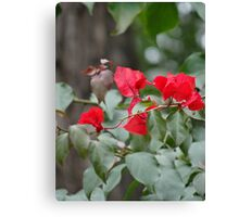 Webbed Red Canvas Print