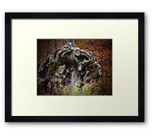 Grandmother Trees of the Forest Framed Print