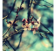 Blooming Beautiful Photographic Print