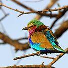 Pretty Bird!! by jozi1