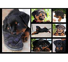 Collage Of Cute Female Rottweiler Puppy Photographic Print