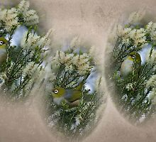 Vignettes of a Silvereye in a Honey Myrtle Shrub by Melanie Weerasiri