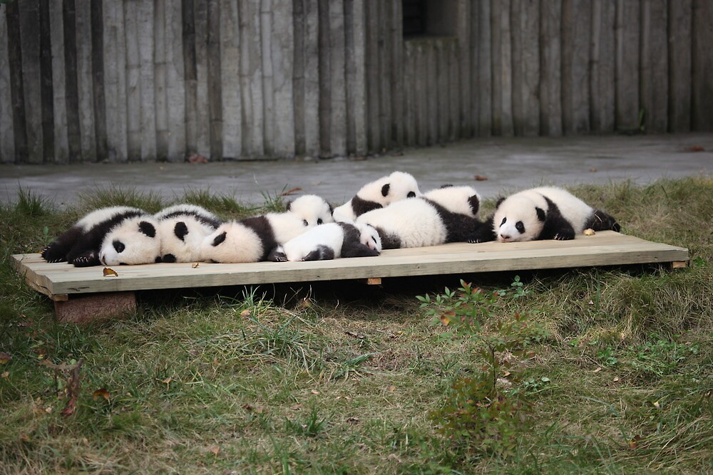 A Platter Of Pandas by v-something