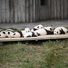 A Platter Of Pandas by v-something