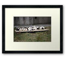 A Platter Of Pandas Framed Print