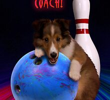Thanks Coach Sheltie Puppy by jkartlife