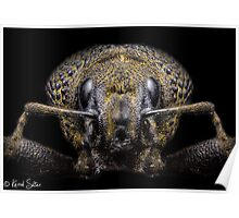 'Portrait Of A Weevil' Poster