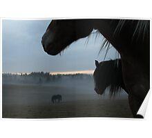 Horses. October evening. Norway. Poster