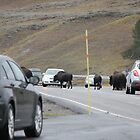 Yellowstone Traffic Jam by Jennifer Heseltine