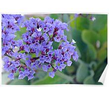 Wild Flora Poster