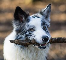 Stick Merle by Karen Havenaar