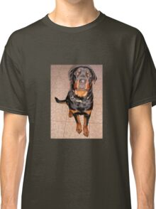 Portrait Of A Young Rottweiler Male Sitting Classic T-Shirt