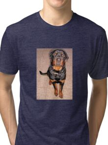 Portrait Of A Young Rottweiler Male Sitting Tri-blend T-Shirt