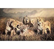 Serengeti Lions Photographic Print