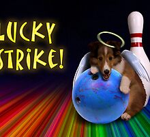 Lucky Strike Sheltie Puppy by jkartlife