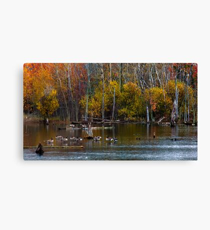Annual Meet and Greet at the Pond Canvas Print