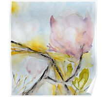 dazzling sunlit magnolia Poster