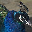 Colourful beauty by Steve plowman