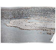 Dead Sea salt crystals Poster