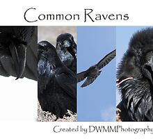 Common Ravens by DWMMPhotography