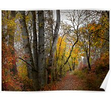 Takena Trail ~ Fall Colors ~ Poster