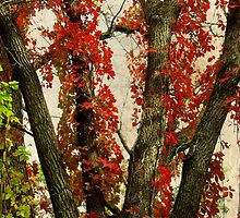 Autumn Red by MSRowe Art and Design