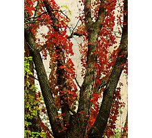 Autumn Red Photographic Print