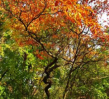 Autumn Color At Old Woman Creek 2 by MSRowe Art and Design