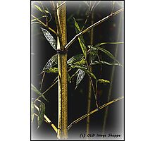 Bamboo I Photographic Print