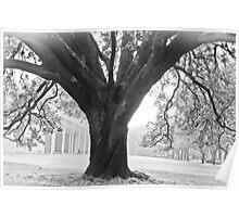 BW Tree Poster