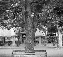 Tree and chair in BW by Camila Currea G.
