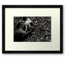 Decaying Cat Framed Print