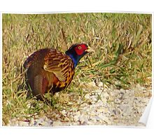 The Ring-necked Pheasant Poster