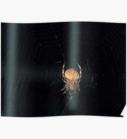 Spider, Spider Poster