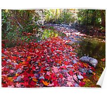 Maple Leaf sprinkles Poster