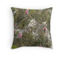 Galah's were tucked up on a cold Spring morning. Mt. Pleasant. Throw Pillow