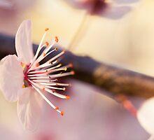 Signs Of Spring V by Josie Eldred