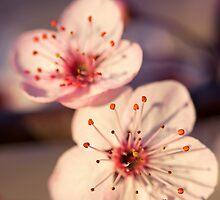 Signs Of Spring II by Josie Eldred