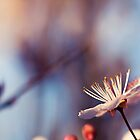 Signs Of Spring III by Josie Eldred