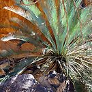 Ancient Cycad by Harry Oldmeadow