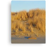Washington Beach Sand Dune Canvas Print