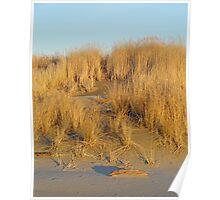 Washington Beach Sand Dune Poster