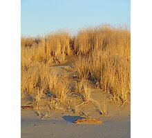 Washington Beach Sand Dune Photographic Print
