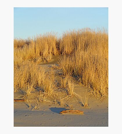 Washington Beach Sand Dune Photographic Print