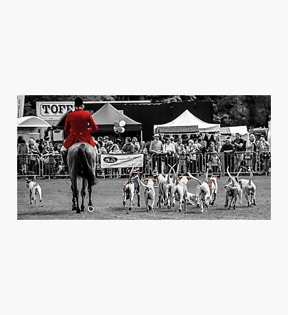 Horse & Hounds Photographic Print