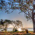 Gum Tree, Australia by Dean Bailey