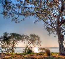 Gum Tree, Australia by Dean Bailey