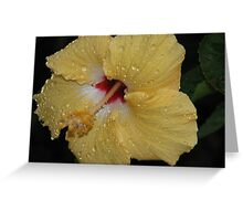 Flower Beauty – 15 Greeting Card